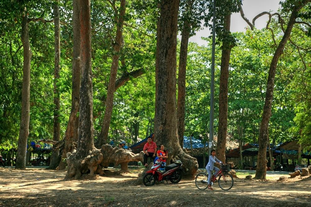 Lạc vào rừng cổ thụ kỳ quáigiữa thành phố ở Việt Nam Redsvn-Ao-Ba-Om-04
