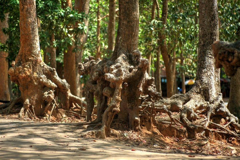 Lạc vào rừng cổ thụ kỳ quáigiữa thành phố ở Việt Nam Redsvn-Ao-Ba-Om-05