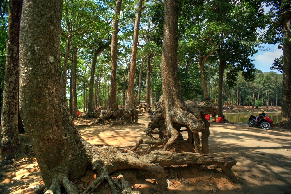 Lạc vào rừng cổ thụ kỳ quáigiữa thành phố ở Việt Nam Redsvn-Ao-Ba-Om-06