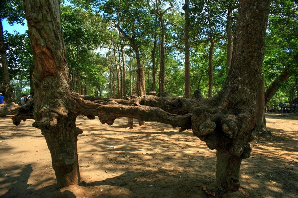 Lạc vào rừng cổ thụ kỳ quáigiữa thành phố ở Việt Nam Redsvn-Ao-Ba-Om-07