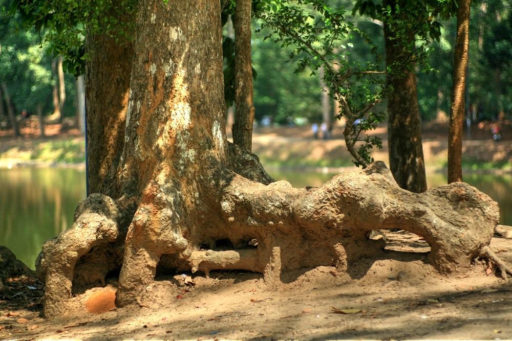 Lạc vào rừng cổ thụ kỳ quáigiữa thành phố ở Việt Nam Redsvn-Ao-Ba-Om-09