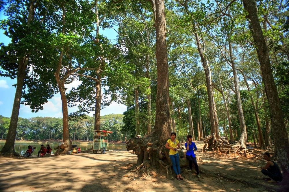 Lạc vào rừng cổ thụ kỳ quáigiữa thành phố ở Việt Nam Redsvn-Ao-Ba-Om-10