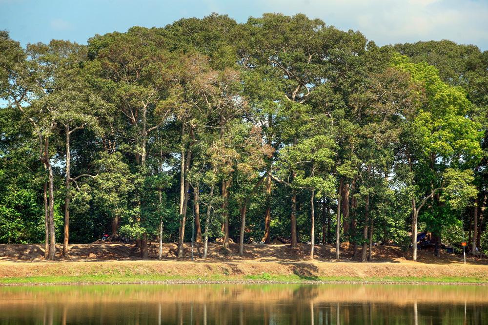 Lạc vào rừng cổ thụ kỳ quáigiữa thành phố ở Việt Nam Redsvn-Ao-Ba-Om-11