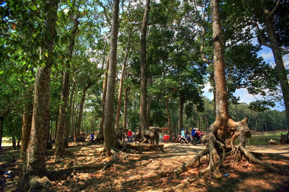 Lạc vào rừng cổ thụ kỳ quáigiữa thành phố ở Việt Nam Redsvn-Ao-Ba-Om-12