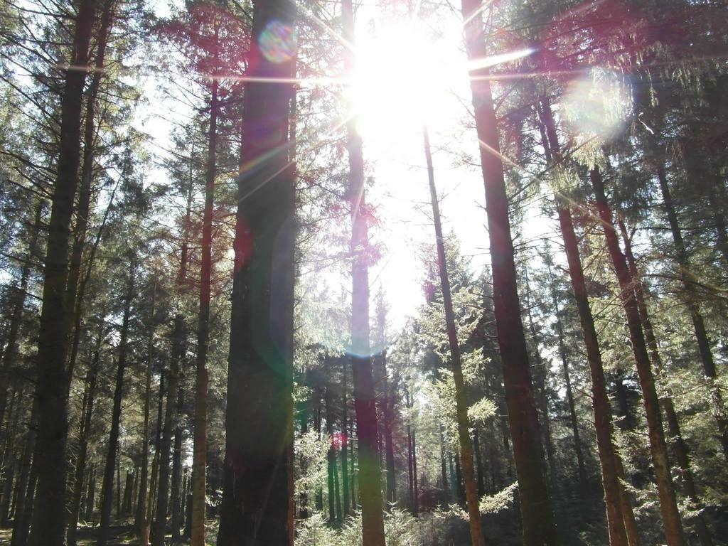 Gorgeous walk at Beacon Fell, Lancashire!  10011571_10155478025000611_7054753295660714225_o