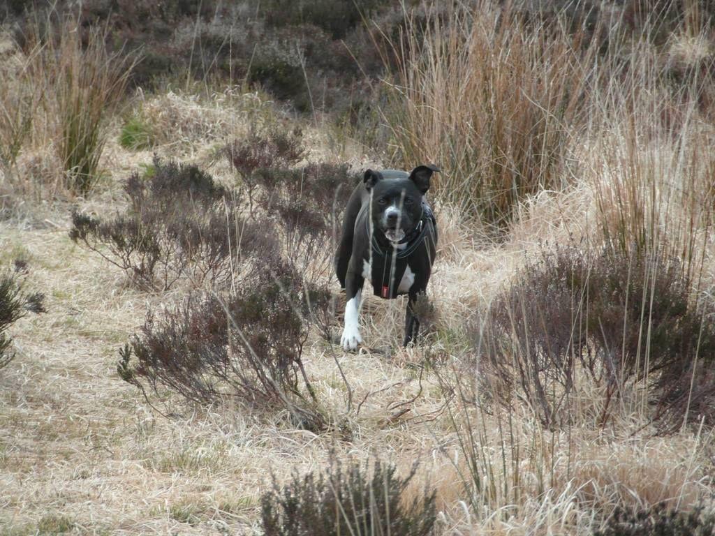 Gorgeous walk at Beacon Fell, Lancashire!  10630632_10155478018230611_5092928158106825160_o
