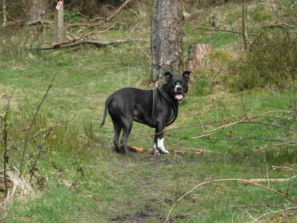 Gorgeous walk at Beacon Fell, Lancashire!  11096402_10155478023525611_4905138054185477867_o