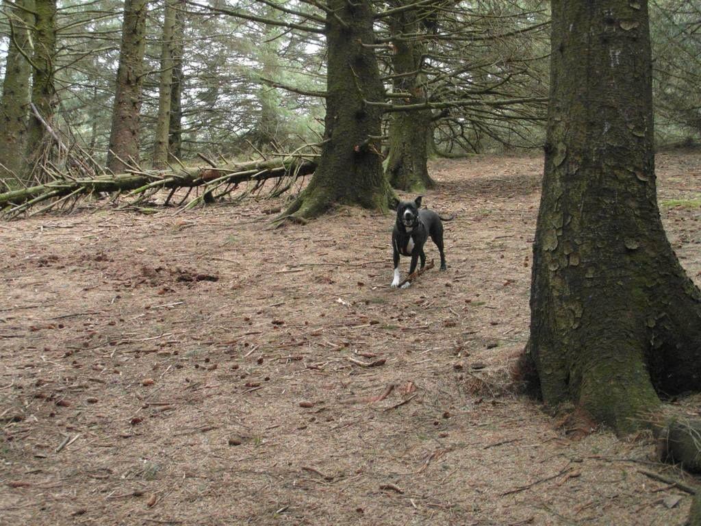 Gorgeous walk at Beacon Fell, Lancashire!  11130153_10155478012735611_3326104998625961735_o