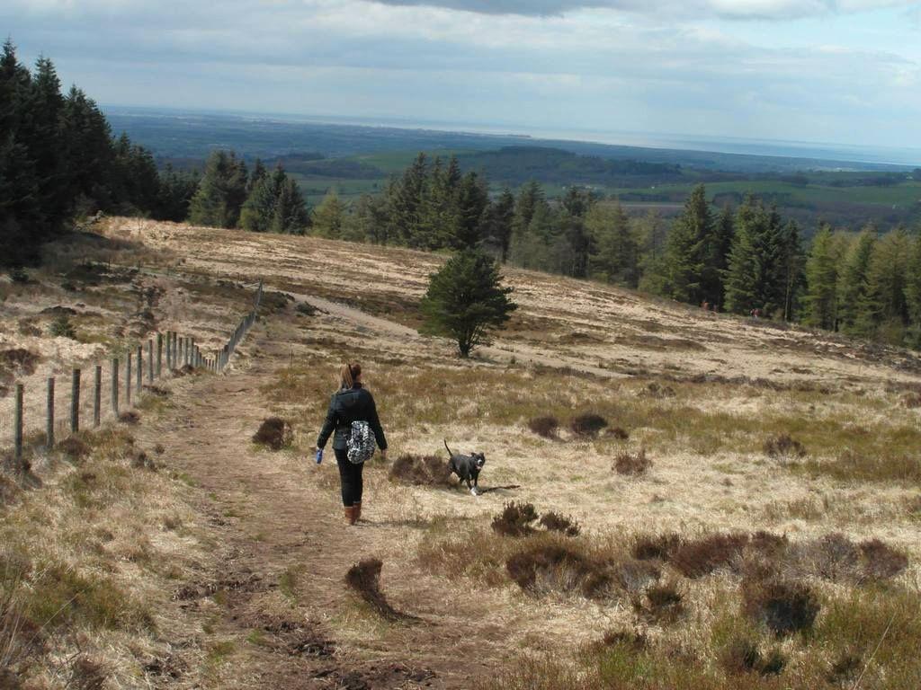 Gorgeous walk at Beacon Fell, Lancashire!  11169784_10155478021010611_8982135332131645399_o