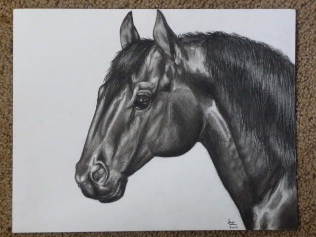 Horse charcoal drawing 8-8-12cleancages035