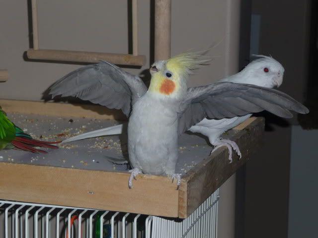 Hiya!! Birdstuff069