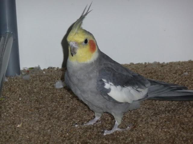Hiya!! Birdstuff104