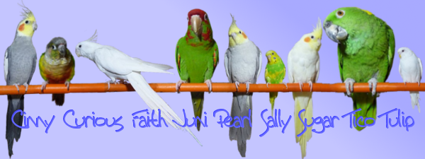 My flock of Budgies Zydabirdsiggy