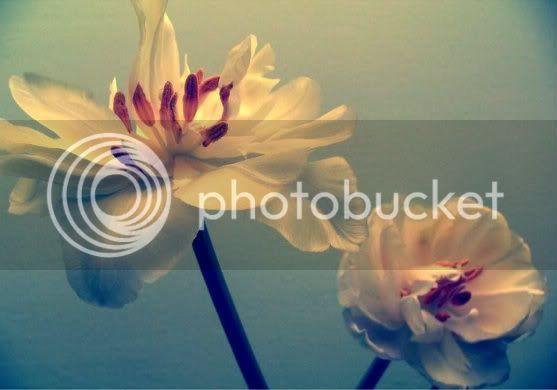 சேனையை அலங்கரிக்கும் பூக்கள் 02 - Page 13 Flowers
