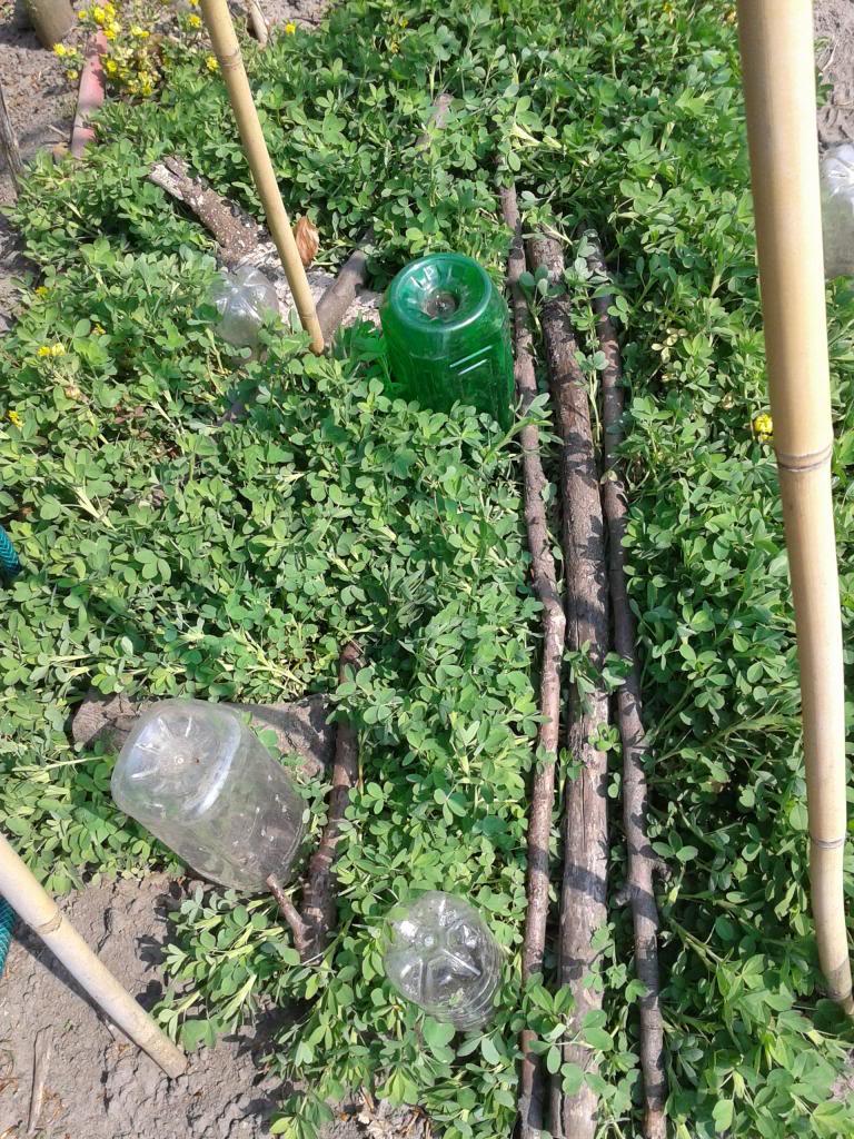 levende mulch/grondbedekking tussen (meerjarige) groenten? - Pagina 2 2014-04-24141501_zpse7efdf48