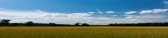 WindClan Territory