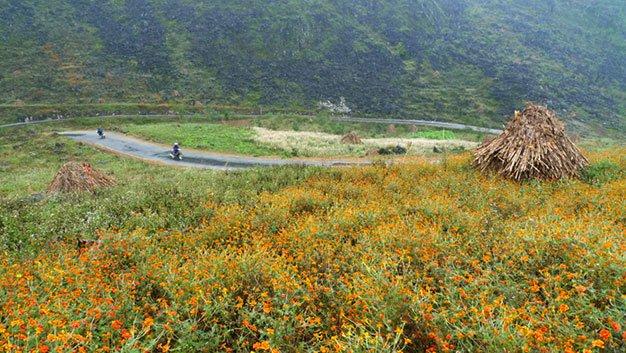 Du lịch Hà Giang có một mùa hoa cúc tại Đồng Văn Co-mot-mua-hoa-cuc-o-dong-van-1_zpsy7zryydu