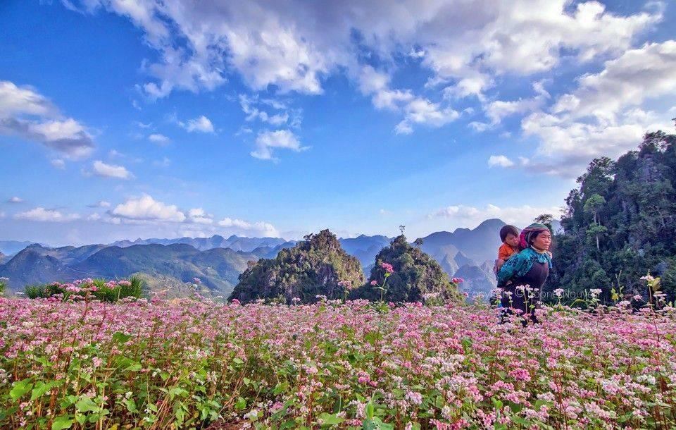 Tháng 10 rủ nhau tour Hà Giang ngắm hoa tam giác mạch Du-lich-ha-giang-4_zps6fjp9qiq