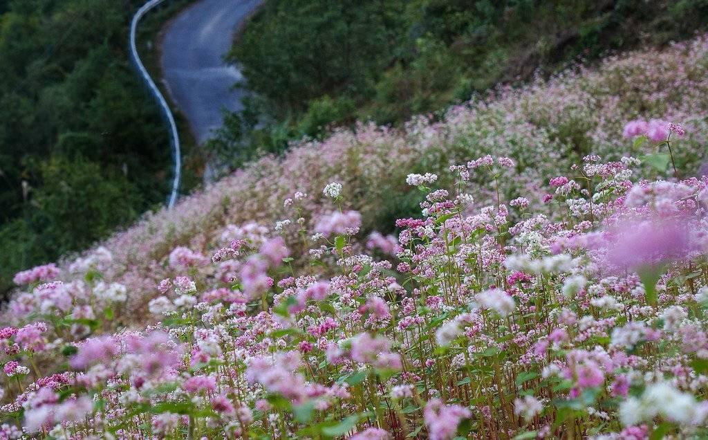 Tháng 10 rủ nhau tour Hà Giang ngắm hoa tam giác mạch Du-lich-ha-giang11_zps4lrnsyoo
