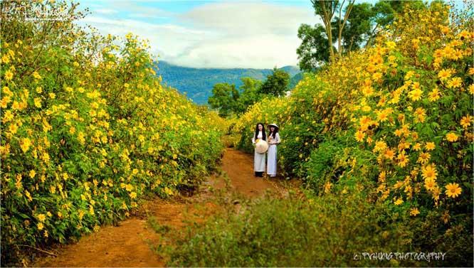 Tháng 11 rủ nhau ngắm hoa dã quỳ bừng nở  Hoa-da-quy-da-lat-3_zpskw82nhkd