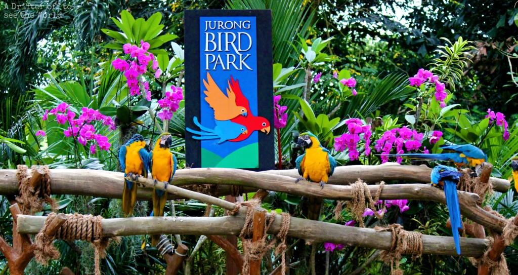Một nghiệm hoàn toàn mới mẻ lúc tới đảo quốc Sư Tử Jurong-bird-park_zpsqtiduocp