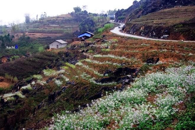 Ngắm hoa cải khi đi du lịch Hà Giang Mua-hoa-no-ruc-ro-tren-mien-da-ha-giang-2_zpsqn90vws1
