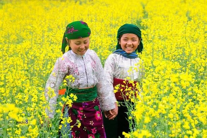 Ngắm hoa cải khi đi du lịch Hà Giang Mua-hoa-no-ruc-ro-tren-mien-da-ha-giang-5_zps6irxxts8