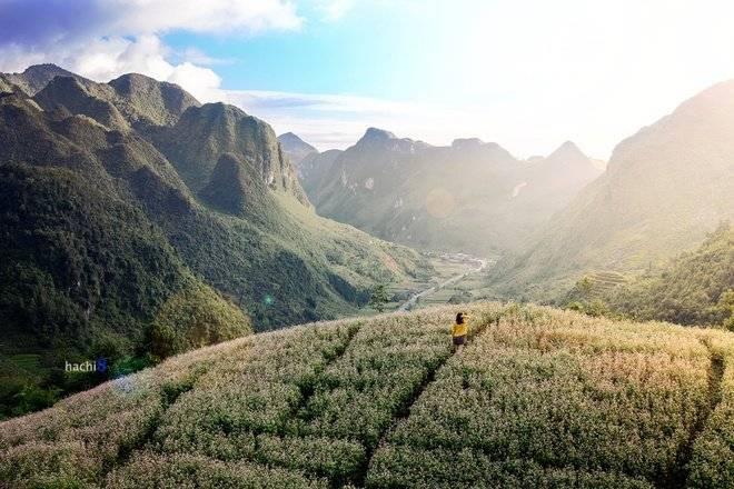 Tam giác mạch là loài hoa đặc trưng của cao nguyên đá Hà Giang  Nhung-mua-hoa-moi-goi-dan-phuot-dip-cuoi-nam-2_zpsrknr0qxk