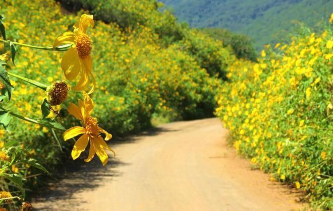 Tam giác mạch là loài hoa đặc trưng của cao nguyên đá Hà Giang  Nhung-mua-hoa-moi-goi-dan-phuot-dip-cuoi-nam-3_zpspnew53zf