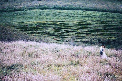 Tam giác mạch ko chỉ có ở Hà Giang Tam-giac-mach-khong-chi-co-o-ha-giang-21_zpsuaskhxoe