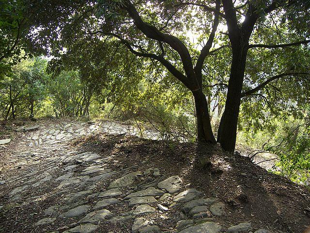 Καλπάκι 3 Νοεμβρίου 1940 - Σελίδα 5 Path-paved-Monterosso_zps631b3945