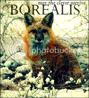 Borealis - wild fox roleplay Ad