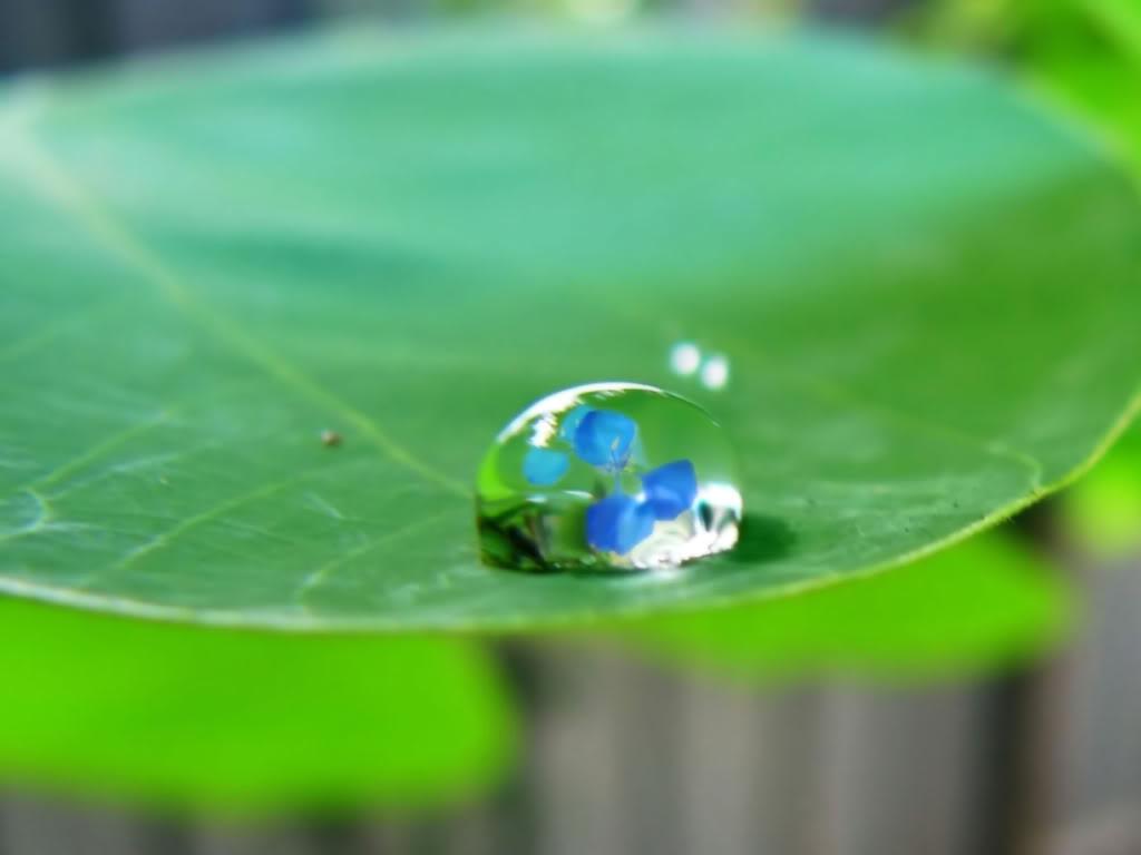 Water Drops HD Desktop Wallpapers Nature_Plants_Water_drop_on_green_leaf_008474__zpsadfdb049