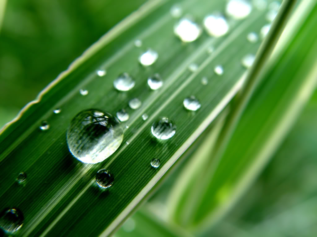 Water Drops HD Desktop Wallpapers Water-Drop-Train-1-1600x1200_zps46db6893