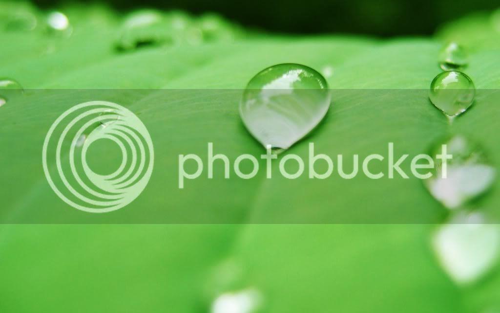 Water Drops HD Desktop Wallpapers Water-Drop3_zps81013bce