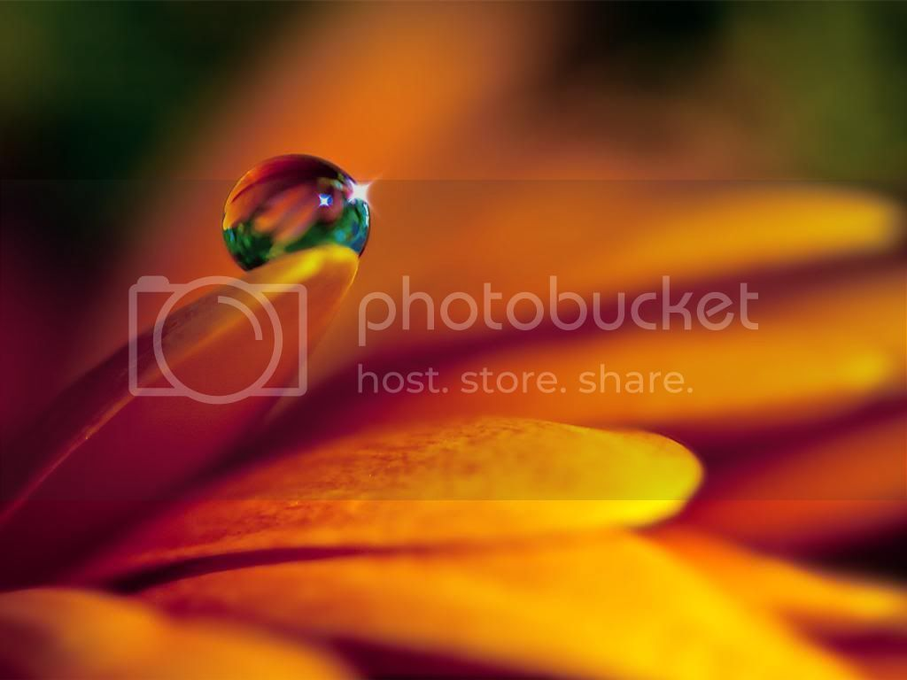 Water Drops HD Desktop Wallpapers WaterDropBeauty_zps053bb82e
