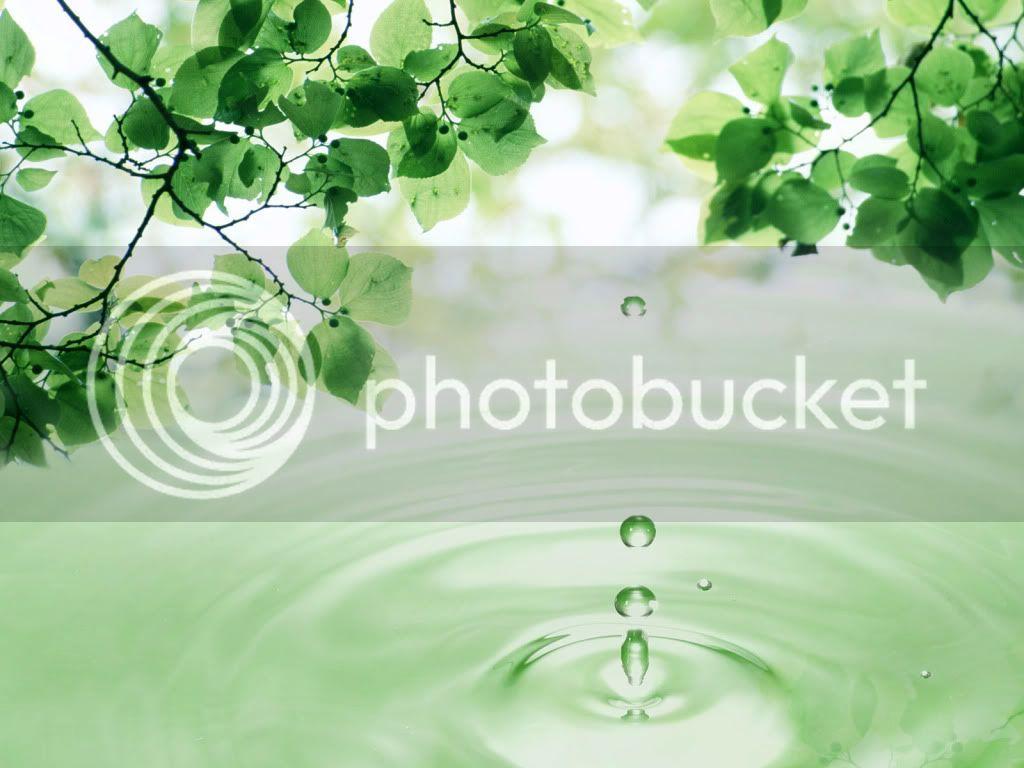 Water Drops HD Desktop Wallpapers Waterdropingfromtheleavewithwaterdropwallpaper_zps1efe2acd