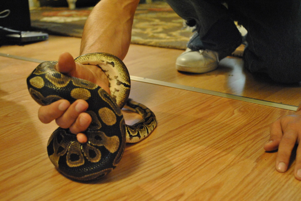 First snake Ball Python Sagan!!!! DSC_0019_zpse8da8680