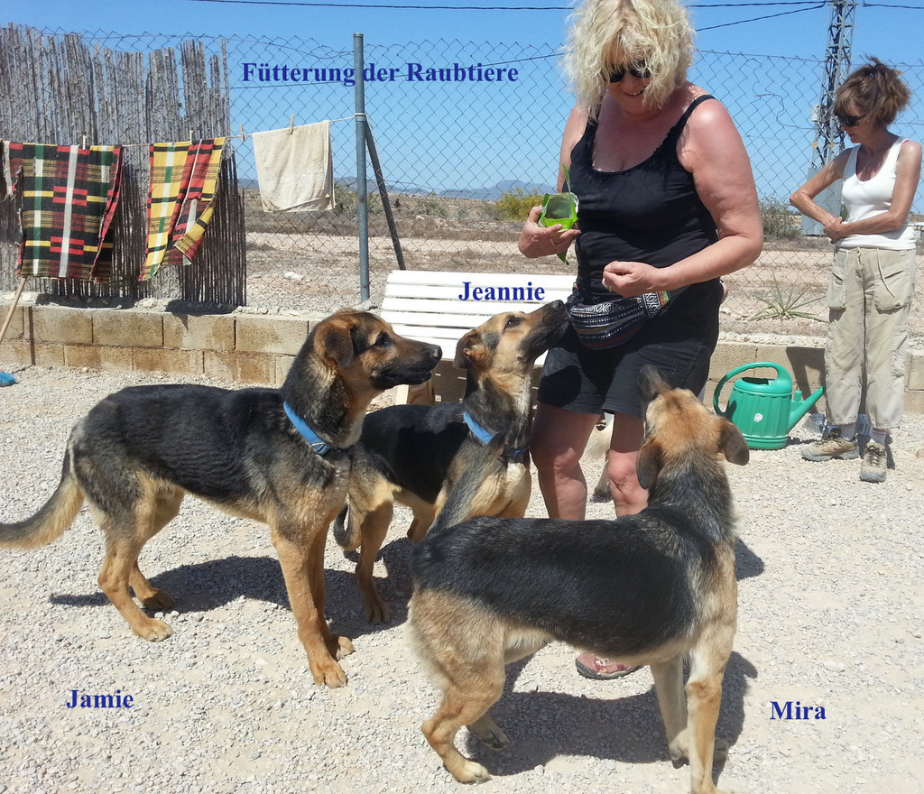 Bildertagebuch - Jeannie: liebes, junges Schäferhundmädchen möchte endlich ins wahre Leben starten...VERMITTELT! 07-02-20160520_161234_zps8odq0tbw