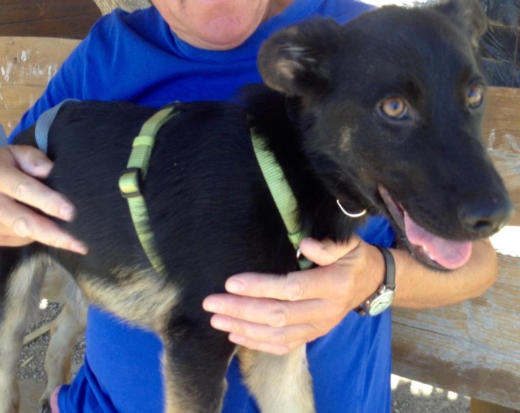 Bildertagebuch - Luki, süßes nettes kleines Hundekind der ein großer Kerl werden möchte ... VERMITTELT! Image_zpsrqdgmovd