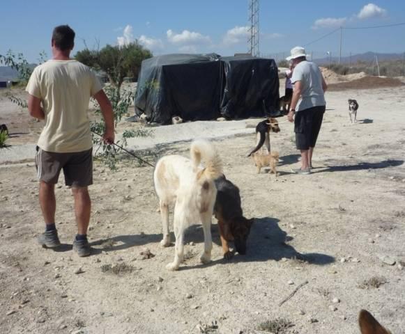 Bildertagebuch - WASHINGTON, XL-Hundemann sucht ein Zuhause... - in Spanien ZUHAUSE GEFUNDEN! 02_zps83301f72