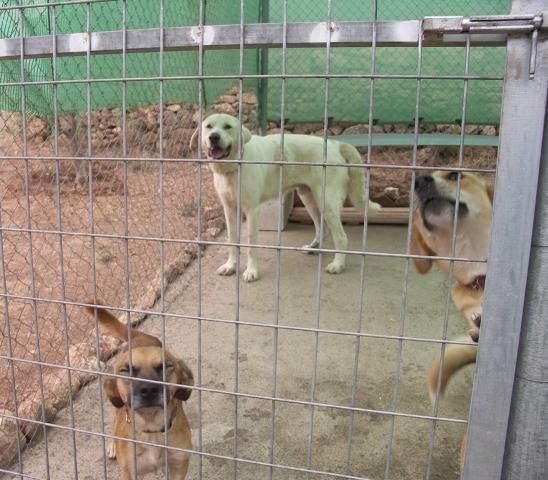 Bildertagebuch - WASHINGTON, XL-Hundemann sucht ein Zuhause... - in Spanien ZUHAUSE GEFUNDEN! 13_zps3918a786