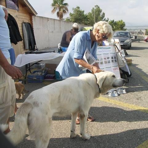 Bildertagebuch - WASHINGTON, XL-Hundemann sucht ein Zuhause... - in Spanien ZUHAUSE GEFUNDEN! 17_zps37434d44