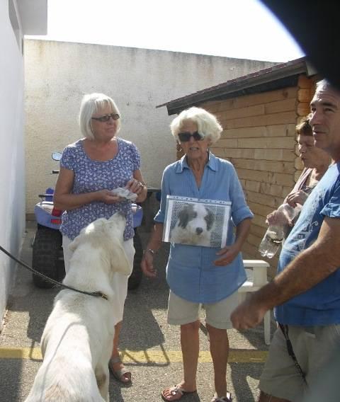 Bildertagebuch - WASHINGTON, XL-Hundemann sucht ein Zuhause... - in Spanien ZUHAUSE GEFUNDEN! 4_zpsa9b2a4f0
