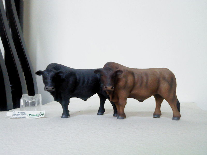 Dr.Narayanan CollectA collection Rsz_red_and_black_angus_bulls_-_collect_a