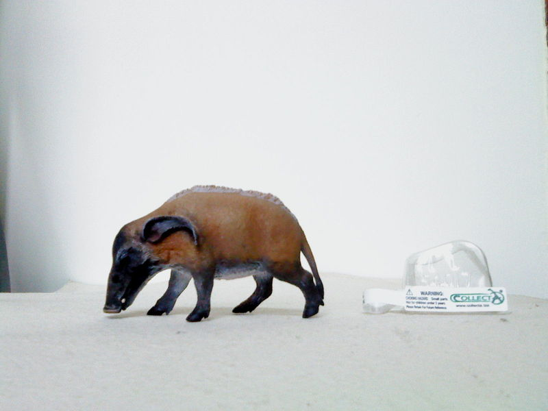 Dr.Narayanan CollectA collection Rsz_red_river_hog