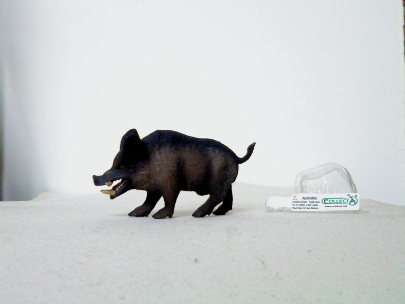 Dr.Narayanan CollectA collection Rsz_wild_boar_charging_1