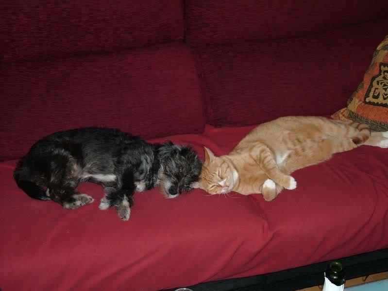 Fotos de nuestros animales - Página 13 Resized_DSCF0035