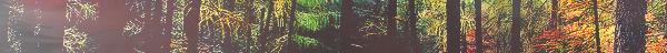 La Forêt du Repos