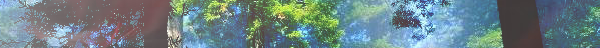 Le Bois Aveugle